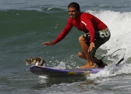 surfingcat.jpg