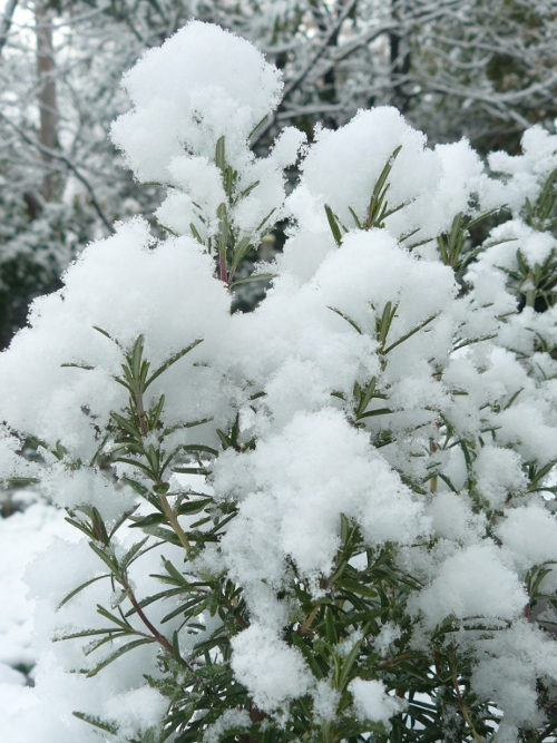 snow16_3