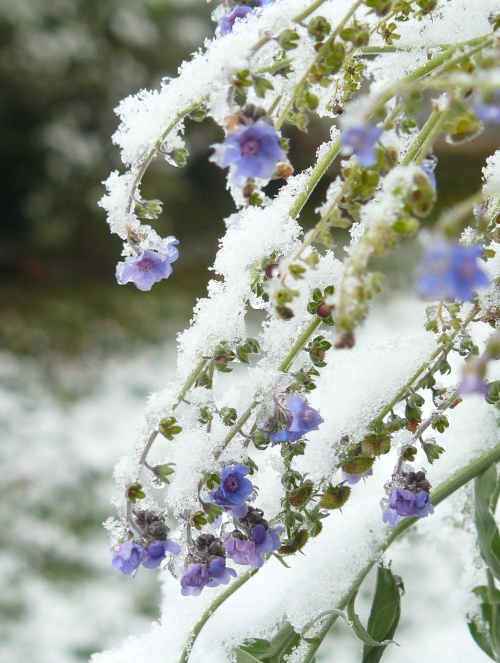 snow16_4